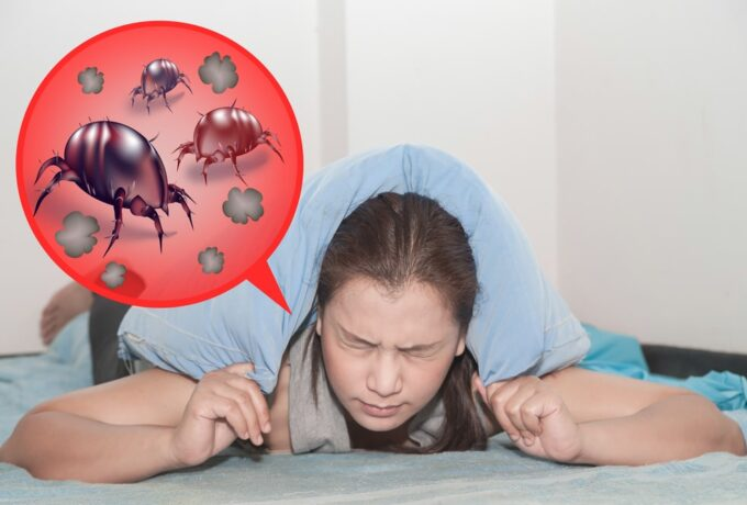 Prévoir et soulager les allergies acariens au printemps